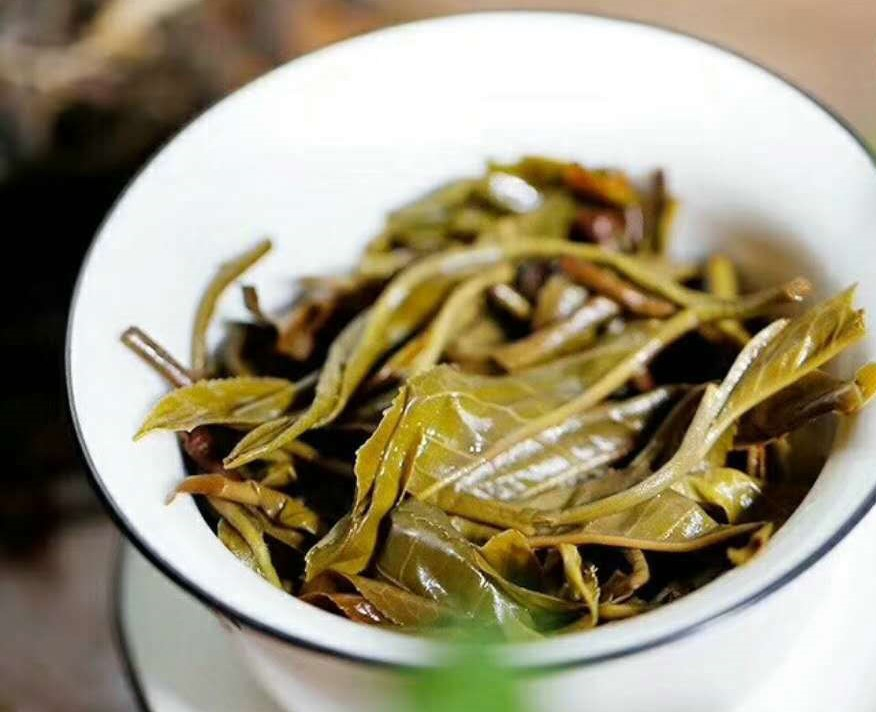 sheng puerh wet leaf